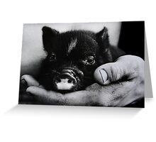 """Piglet in Palm"" Greeting Card"