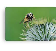Hoverfly wash time Canvas Print