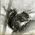 Squirrel in Snowstorm by Bine