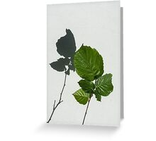 Sophisticated Shadows - Glossy Hazelnut Leaves on White Stucco - Vertical View Upwards Left  Greeting Card