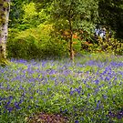 Nature's Carpet by vivsworld