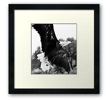 Black & White Eagle Framed Print