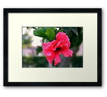 Pink Tropical Flower Framed Print