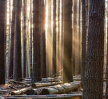 Sunset at Sugar Pine Walk by yolanda