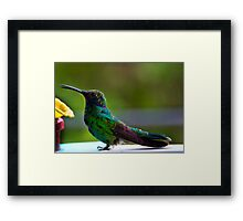 Belly Up To The Bar Framed Print