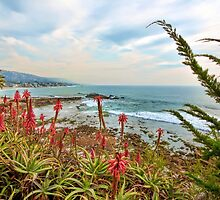 Laguna Beach California Scenic View by K D Graves Photography