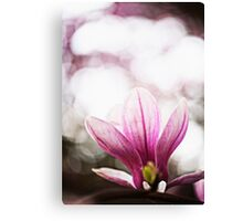 Sweet Magnolia Morning Canvas Print