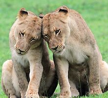 Don`t worry sis the big lions won`t hurt us!! by jozi1