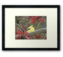 Relaxed Goldfinch Framed Print