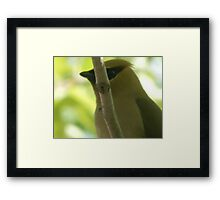 You cant see me... Waxwing Framed Print