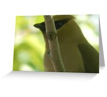 You cant see me... Waxwing Greeting Card
