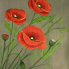 Poppies-3 by maggie326