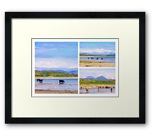 Let's cool our feet off Framed Print