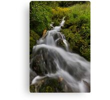 Water fall with moss and trees Canvas Print
