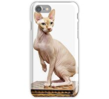 Beautiful sphynx cat with yellow eyes portrait on white background iPhone Case/Skin