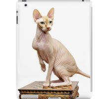 Beautiful sphynx cat with yellow eyes portrait on white background iPad Case/Skin