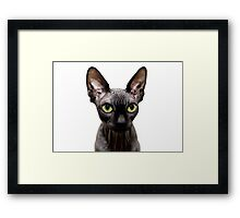Beautiful sphynx cat with yellow eyes portrait on white background Framed Print