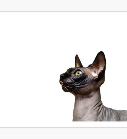 Beautiful sphynx cat with yellow eyes portrait on white background Sticker