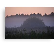 Hedgehog in the Mist Canvas Print
