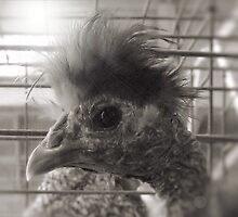 Lil Elvis, The King of Cock and Crow by © Bob Hall
