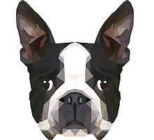 Crystalline Boston Terrier Photographic Print