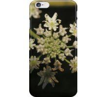 Flowering Wild Carrot iPhone Case/Skin