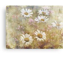 Daisy Dreams Canvas Print
