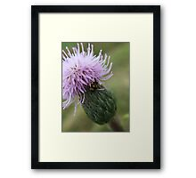 Fuzzy Purple Flower with Yellow Beetle Framed Print
