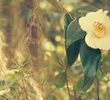 Winter Flowers - Charleston, SC Sticker