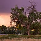Thunderstorm In The Woods by Bo Insogna
