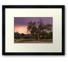 Thunderstorm In The Woods Framed Print