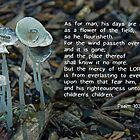 Psalm 103 What lasts... by Robin Clifton