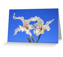 Coffee Bush Purity - Wild Flowers from Africa - Delicate Beauty Greeting Card