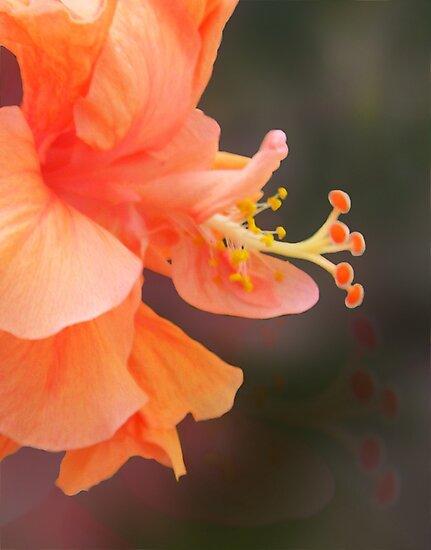 Peach Glow by Ginny Schmidt
