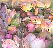 Lotus Bud Moods by Carol  Cavalaris