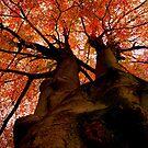 Daunting Autumn by xenxen