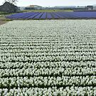 Field of white by bubblehex08
