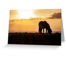 Wild pony sunset Greeting Card