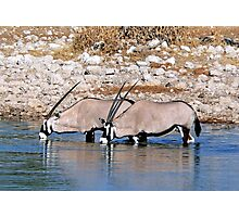 Oryx Drinking Photographic Print