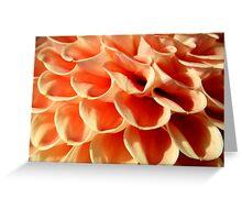 Petals of Orange Greeting Card