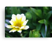 The Simplistic Beauty of Nature Canvas Print