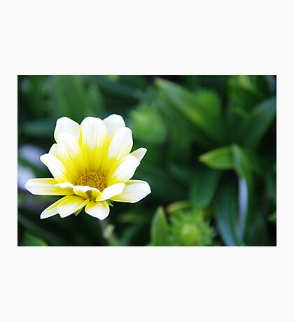 The Simplistic Beauty of Nature Photographic Print