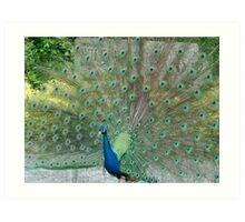 Romancing Peacock Art Print