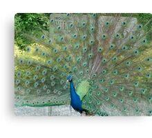 Romancing Peacock Canvas Print