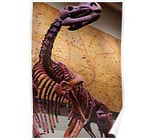 Muttaburrasaurus Poster
