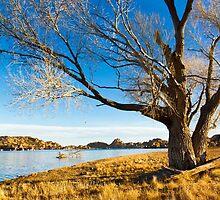 Barren Tree by BGSPhoto