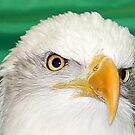 Eyes of an Eagle by vette