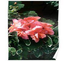Pink Flora Poster