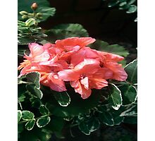 Pink Flora Photographic Print