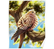 Little Dove on a Branch Poster